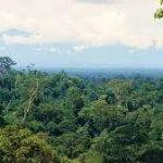 タイの薬草地帯視察及びタイ独自の漢方薬について